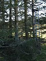 Forest lookout. - geograph.org.uk - 385784.jpg