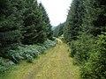 Forest track near Loch Awe side - geograph.org.uk - 1406881.jpg