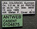 Formica coloradensis casent0104875 label 1.jpg