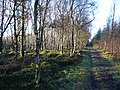 Forty Acre Wood Footpath - geograph.org.uk - 313716.jpg