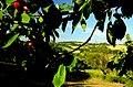 Frutta di stagione - panoramio.jpg