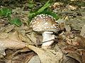 Fungi 036.jpg