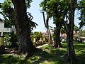 FvfMariaAurora7477 38.JPG