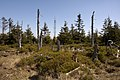 Góry Izerskie - panoramio (4).jpg