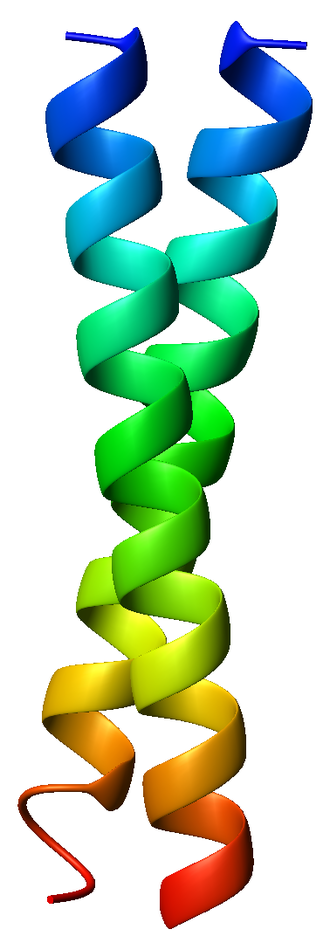 Coiled coil - Figure 1: The classic example of a coiled coil is the GCN4 leucine zipper (PDB accession code 1zik), which is a parallel, left-handed homodimer. However, many other types of coiled coil exist.