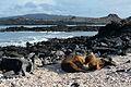 Galápagos Inseln, Ecuador (13918585224).jpg