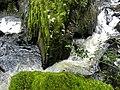 Ganllwyd NNR - panoramio (9).jpg
