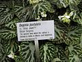 Gardenology.org-IMG 2405 rbgs11jan.jpg