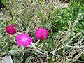 Gardenology.org-IMG 2807 rbgs11jan.jpg