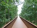 Gedenkstätte Esterwegen - path to the moor - P1030850.JPG