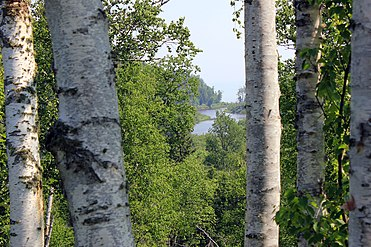 Gfp-minnesota-gooseberry-falls-state-park-view-through-trees.jpg
