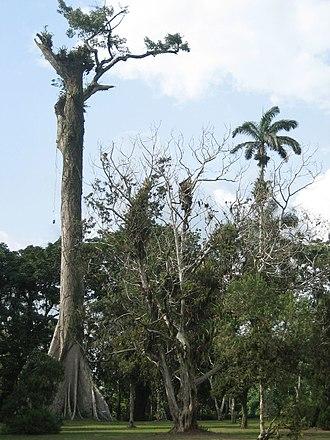 Aburi - Image: Ghana Aburi Botanical gardens (7)
