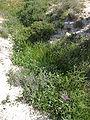 Givat HaArbaa IMG 0535.JPG
