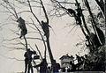 Gledalci na drevesih v Planici 1963.jpg