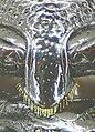 Glischrochilus quadrisignatus detail.jpg