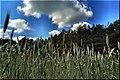 Gmina Narew, Poland - panoramio (43).jpg