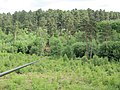 Go Ape Cannock Chase - Zip Wire to Site 5 - panoramio.jpg