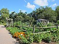 Green Spring Gardens in August (14920290792).jpg