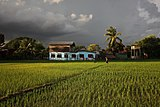 Grey clouds over the luminous paddy fields in Don Det.jpg