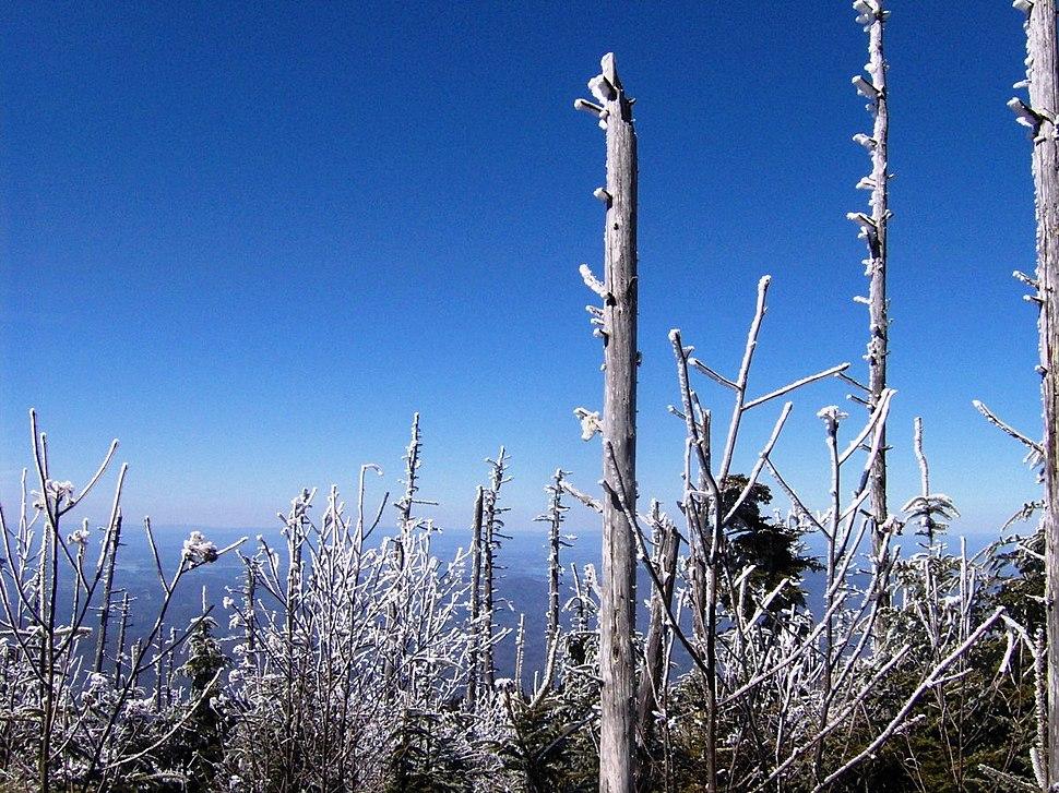 Guyot-summit1