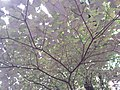 HK hiking 香港 VP 維多利亞山頂 Victoria Peak 舊山頂道 Old Peak Road flora green leaves April 2020 SSG 19.jpg