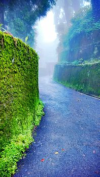 Happy Valley Tea Estate road in Darjeeling.jpg
