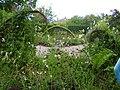 Harlow Carr Gardens - geograph.org.uk - 1719193.jpg