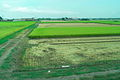 Harvest (2836736478).jpg