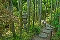 Hasedera-Bamboo Grove.jpg