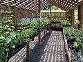 Hazelwood Herb Farm (9460061098).jpg