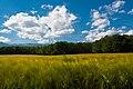 Heading Home Through Farms - panoramio.jpg