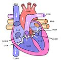 Heart labelled large zh-cn.jpg