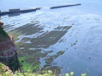 Heligoland Felswatt low tide.jpg