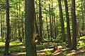 Hemlock Forest (21418956998).jpg