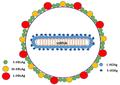 Hepatitis-d-virion-Pathogens-04-00046-g001-1024.png