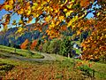 Herbst bei Haselbach -second prize winner 10.2010 - panoramio.jpg