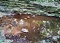 Hidden Falls - St Paul, MN - panoramio (48).jpg