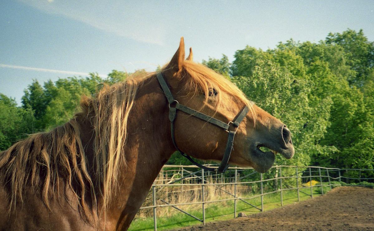 A cheval sur mon homme - 4 1