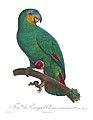 Histoire naturelle des perroquets (9949538644).jpg