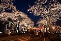 Hitachi Sakura Festival, Ibaraki 23.jpg