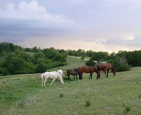Horses and thunderstorm1.jpg