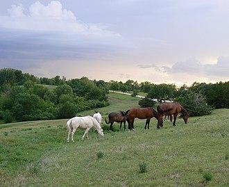 Platte River State Park - Horses in Platte River State Park
