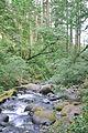 Horsetail Falls Hike, Columbia Gorge - Anna Del Savio (II).jpg