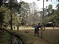 Horto Florestal. - panoramio (2).jpg