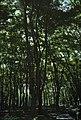 Http-fakezarathustra.blogspot.com-2010-10-13.html http-fakezarathustra.blogspot.com-2010-10-23.html http-fakezarathustra.blogspot.com-2010-10-33.html - panoramio (1).jpg