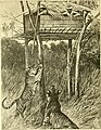 Hunting and trapping stories; a book for boys (1903) (14802421823).jpg