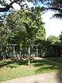 Hyophorbe indica - Jardin d'Éden.JPG