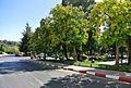 Ifran, Morocco - panoramio (1).jpg