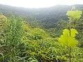 Ilet bananes - panoramio.jpg