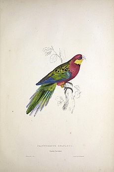 A mainly red and green parrot